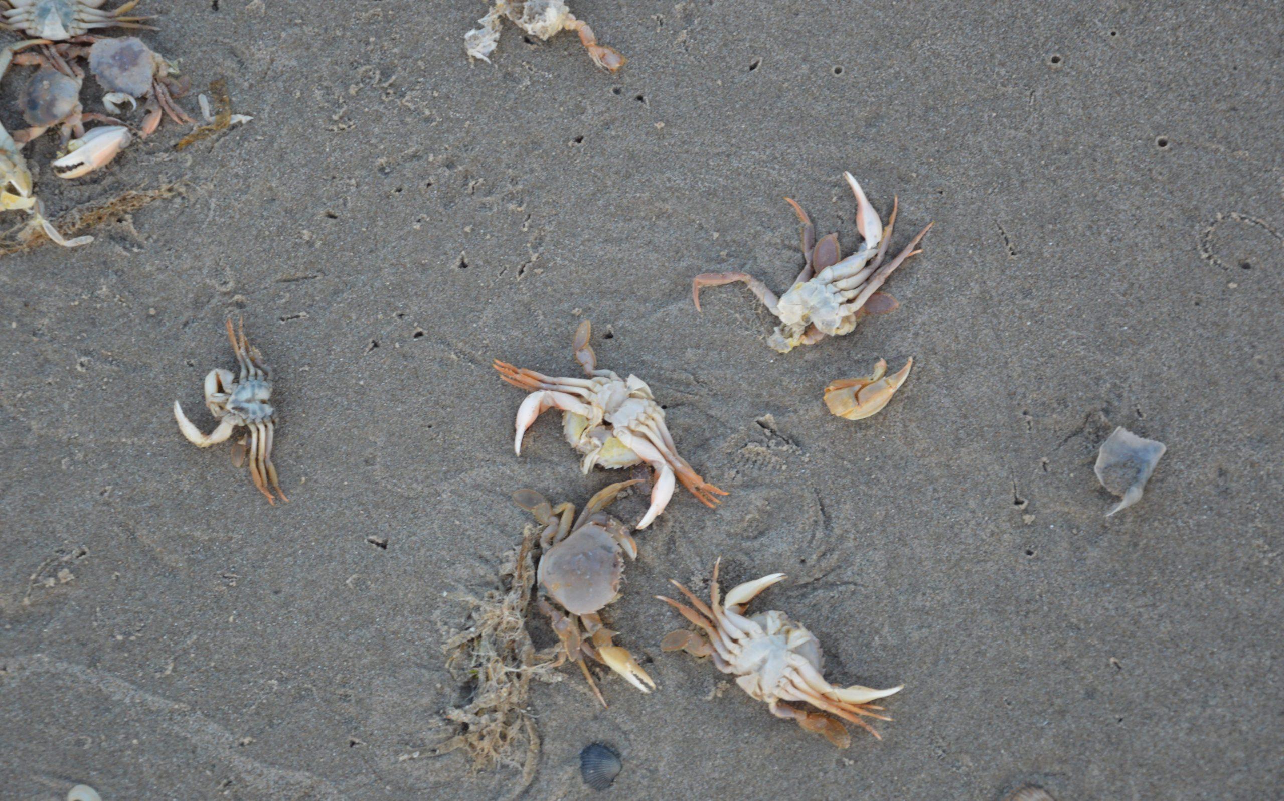 krabben vissen terschelling