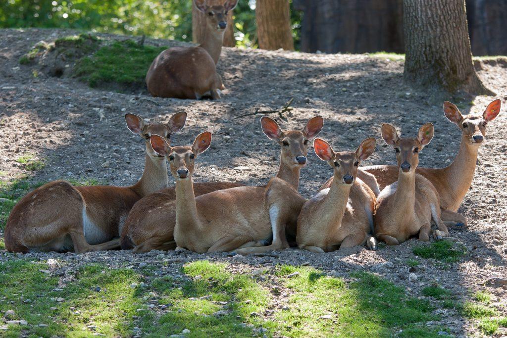 lierherten burgers zoo