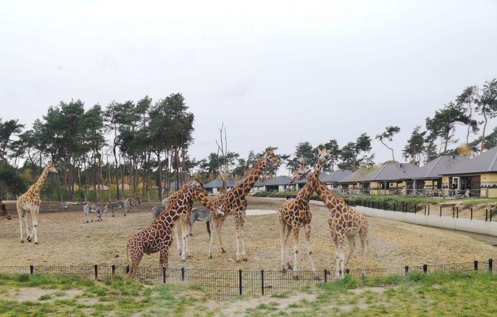 safari lodges op het safari resort