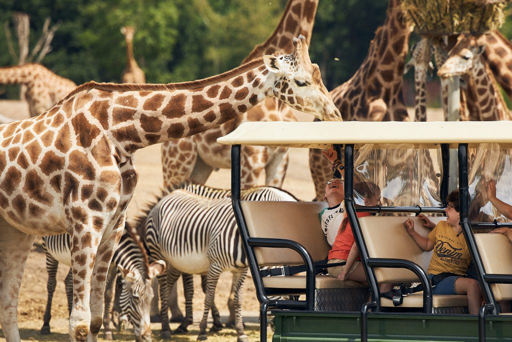 safaripark beekse bergen met kinderen