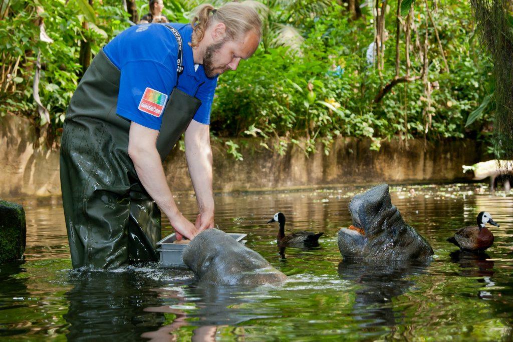 burgers zoo zeekoeien voeren