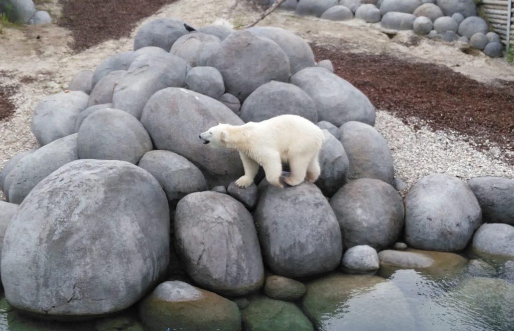 nortica ijsberen wildlands emmen