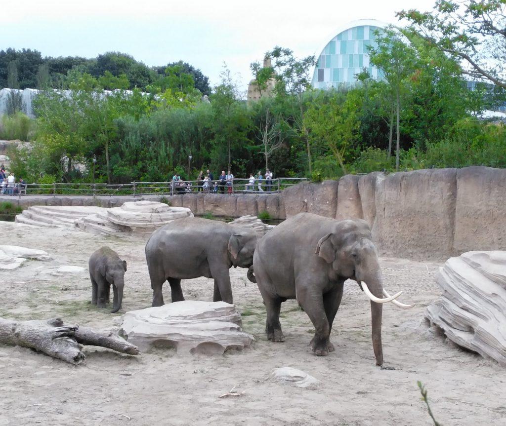 wildlands emmen olifant