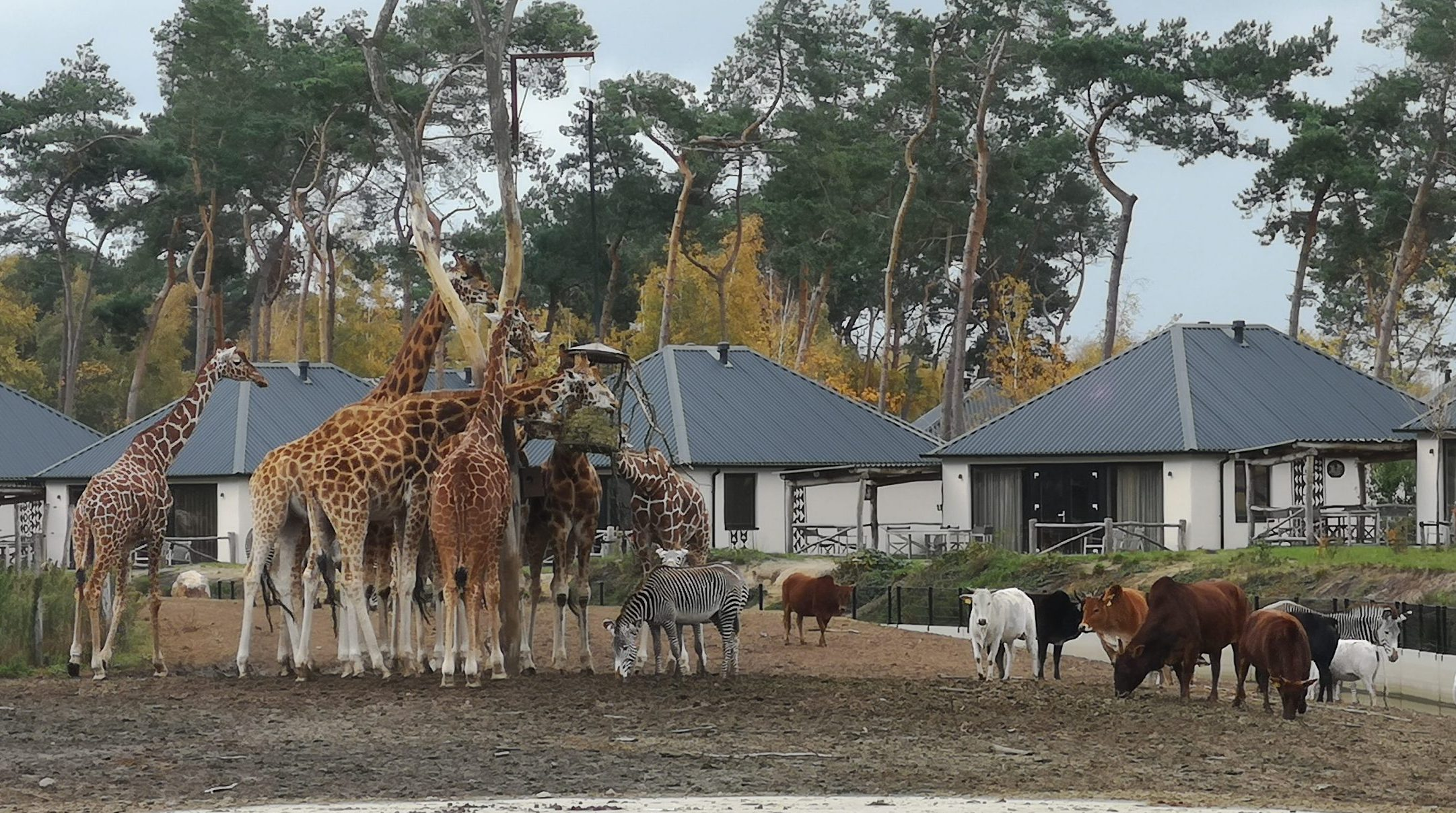 Review: Safari Resort Beekse Bergen