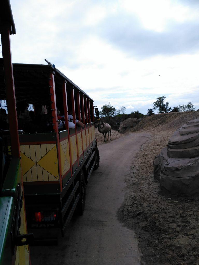 serenga safari