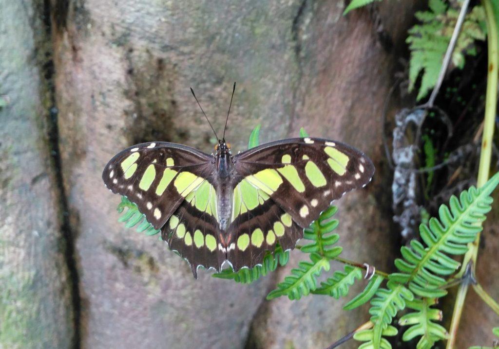 wildlands vlinders