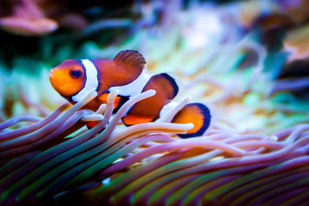 zee aquarium ibiza
